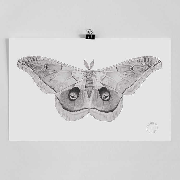 Sarah Hammond - Silk Moth Limited Edition Print