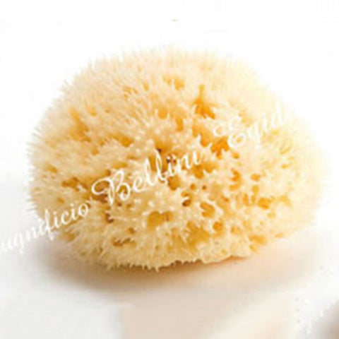 Bellini Sea Sponge Honeycomb