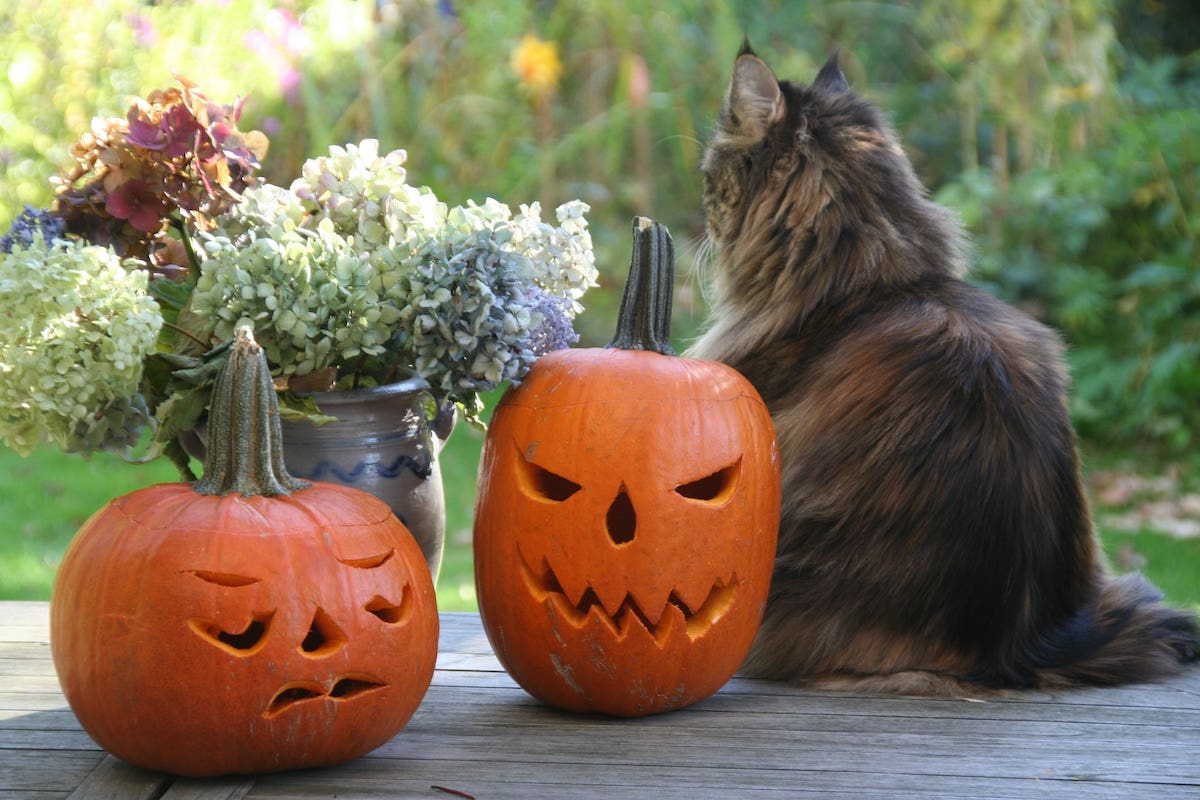 10 Adorable Halloween Dog & Cat Toys your Pet Will Love