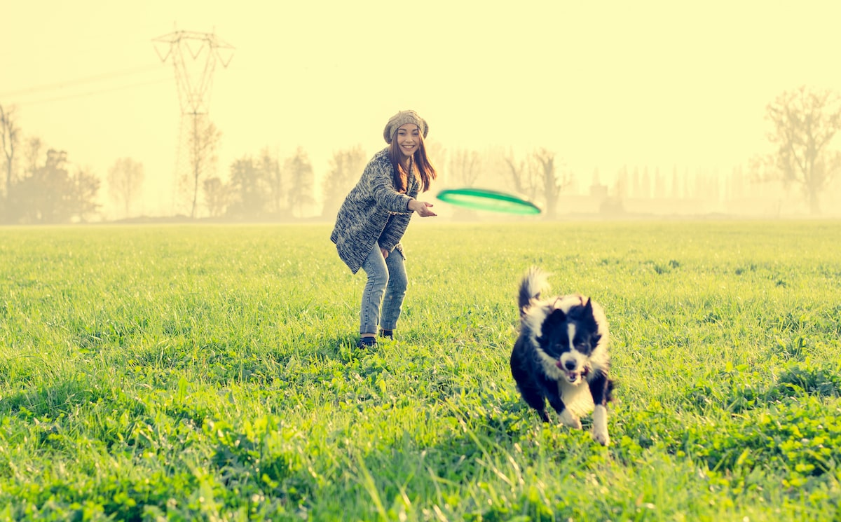 dog playing outside with owner in grass field