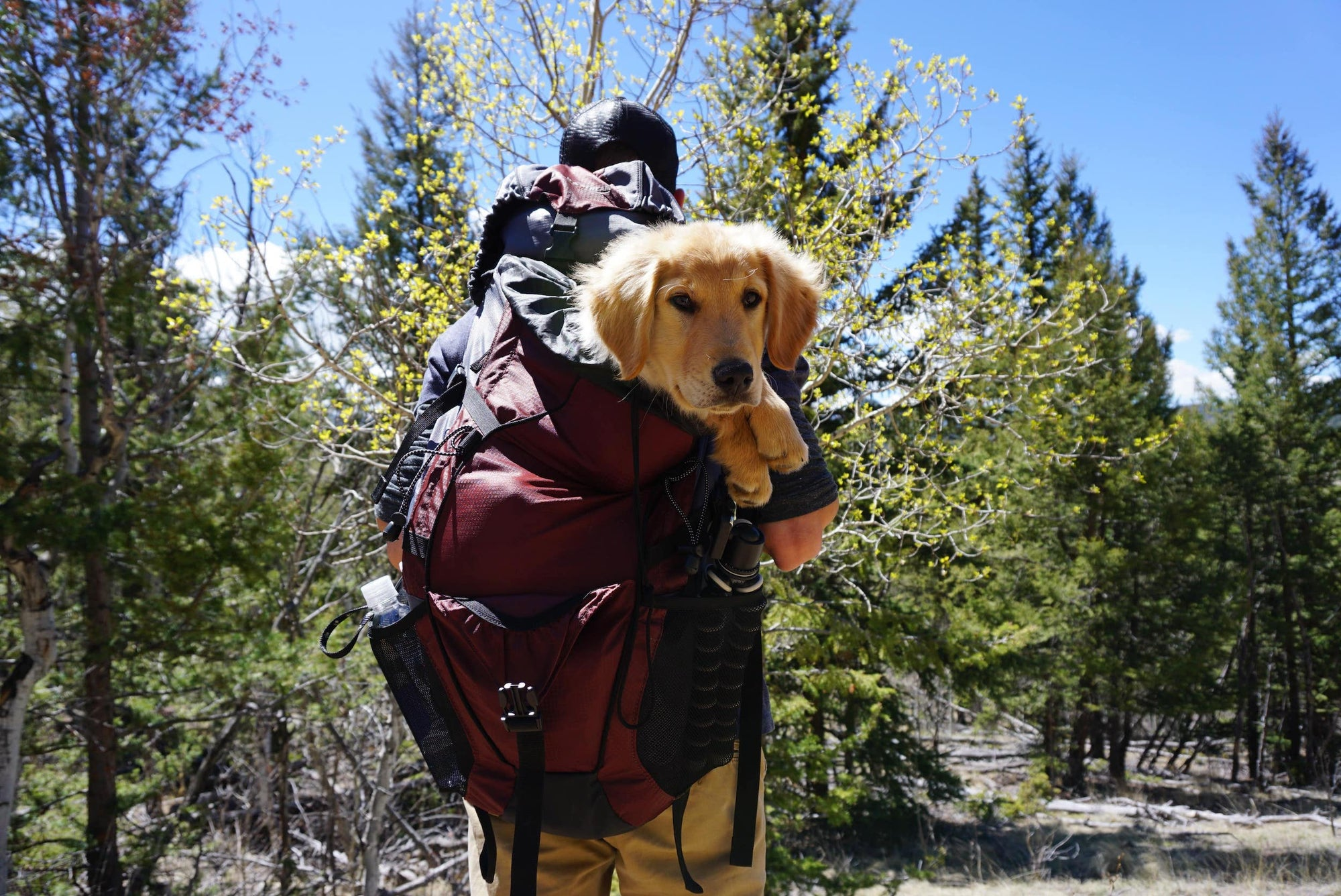 Everything You Need to Know About Backpacking with Dogs