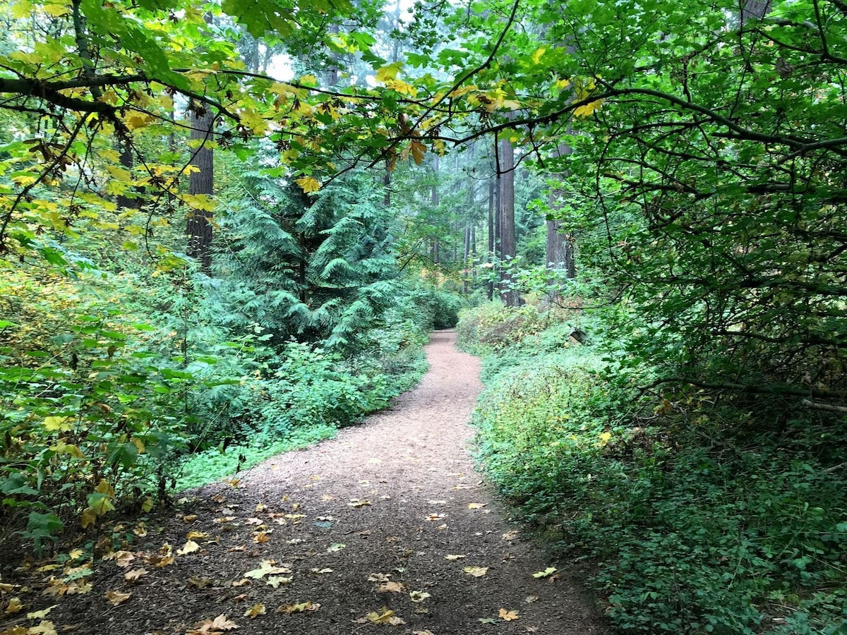 Mount Tabor Park Loop Off-Leash Hiking Trail for Dogs