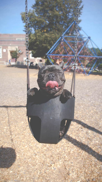 Black Dog in Swing with Skin Cancer