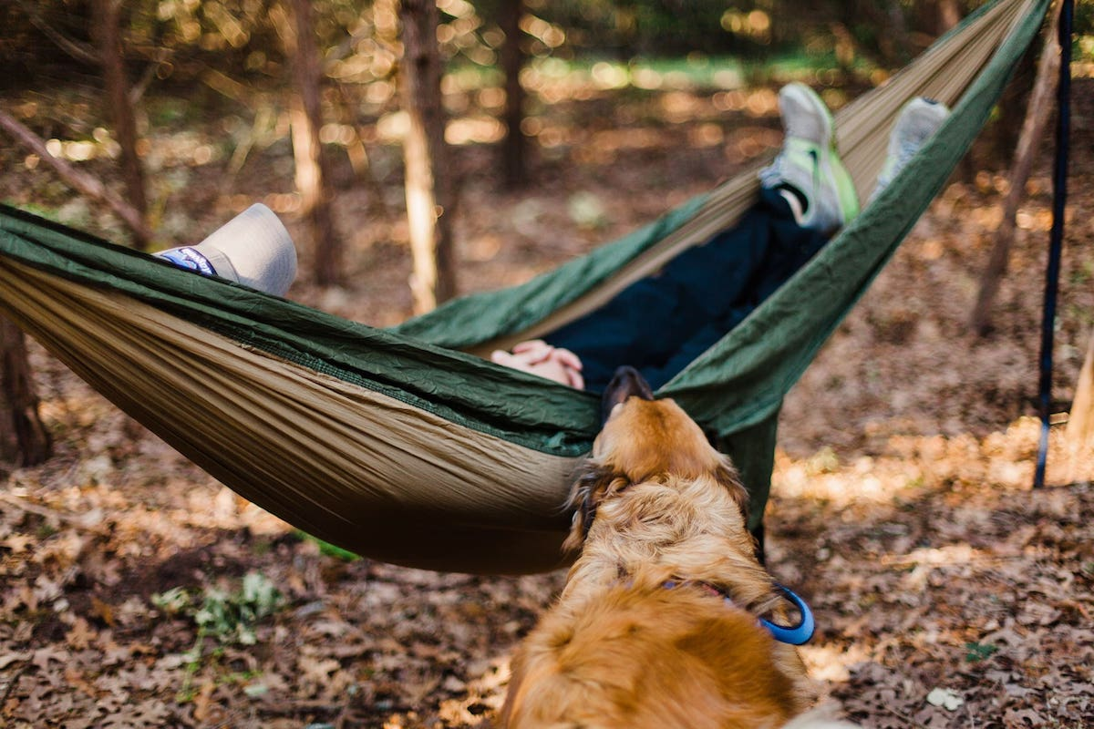 dog with owner in hammock outside in summer