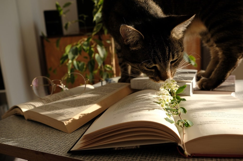 Curious Cat on Table with Book Smelling Plant