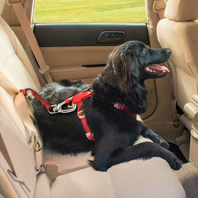 Kurgo Swivel Tether Dog Car Restraint