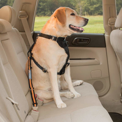 Kurgo Dog Seatbelt Tether, Black/Orange