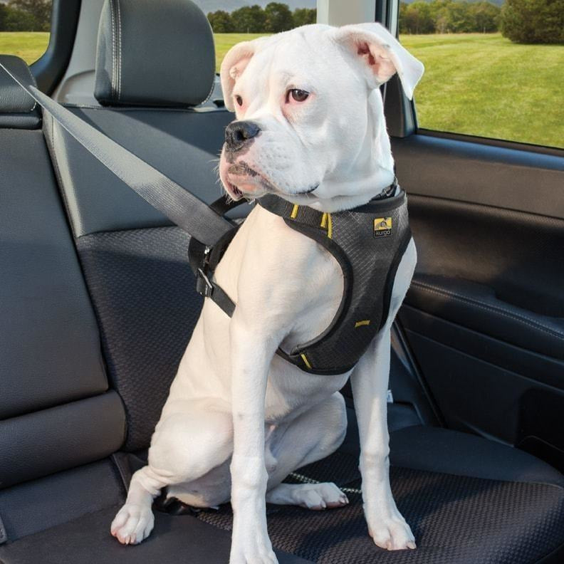 Impact Dog Car Seat Belt Harness By Kurgo