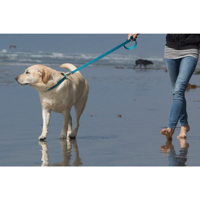 LupinePet Eco Tropical Sea 6' Leash
