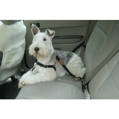 Dolan's Dog Doodads Car Strap Attachment for Harness