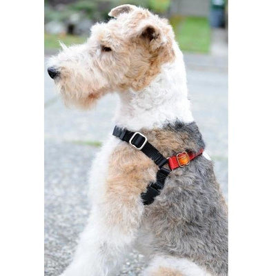 Wonder Walker Dog Harness