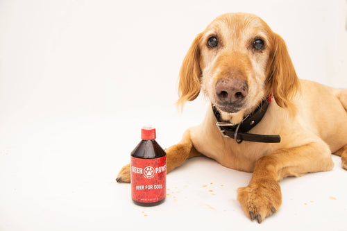 Beer Paws Craft Beer for Dogs