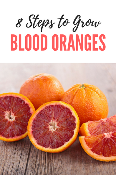How to Grow Blood Oranges in 8 Steps