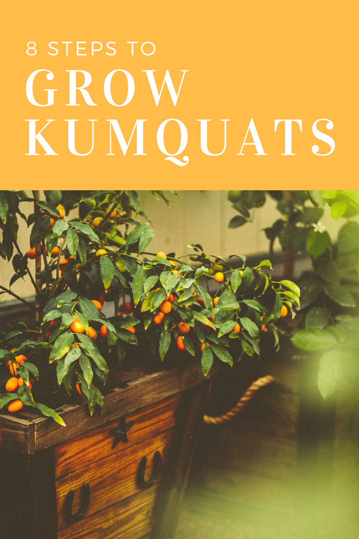How to Grow Kumquats in 8 Steps