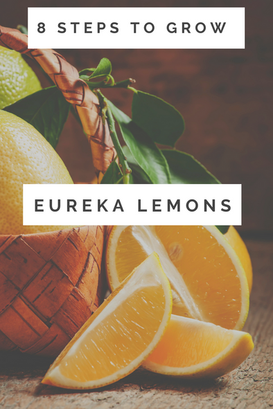How to Grow Eureka Lemons in 8 Steps