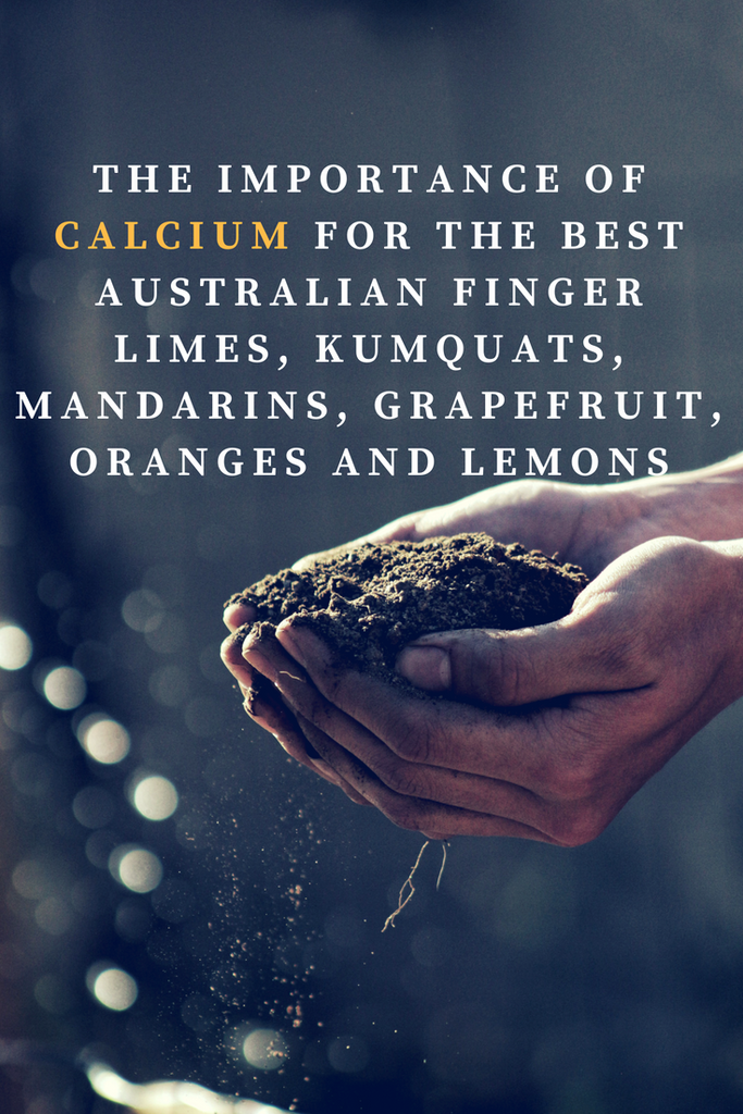The Important of Calcium in Citrus Plants and Trees