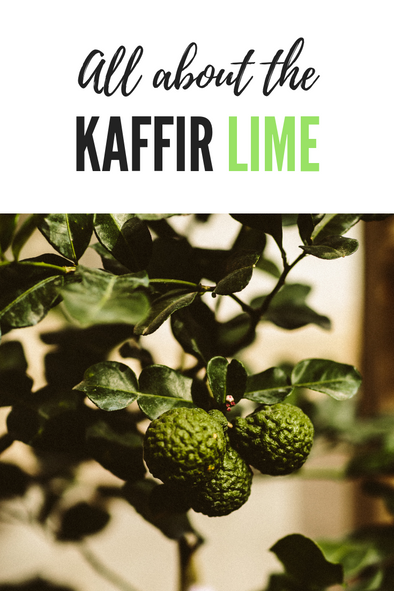 All about the Kaffir Lime