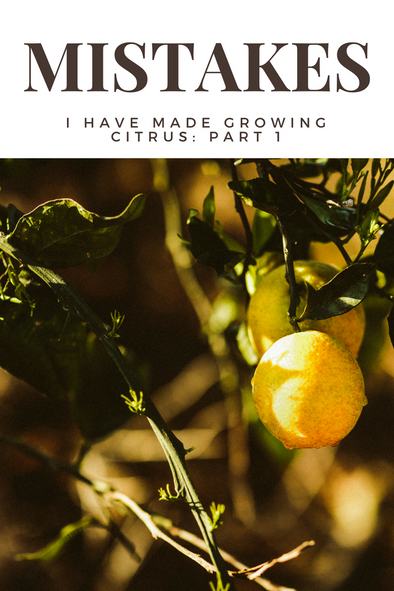 Growing Citrus Tree Mistakes