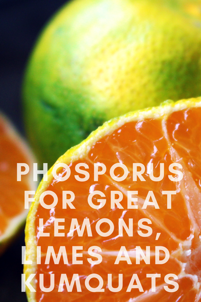 The Importance of Phosphorous for Citrus Plants and Fruit