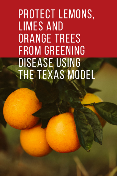 Protect Lemons, Limes and Oranges from Greening with The Texas Model