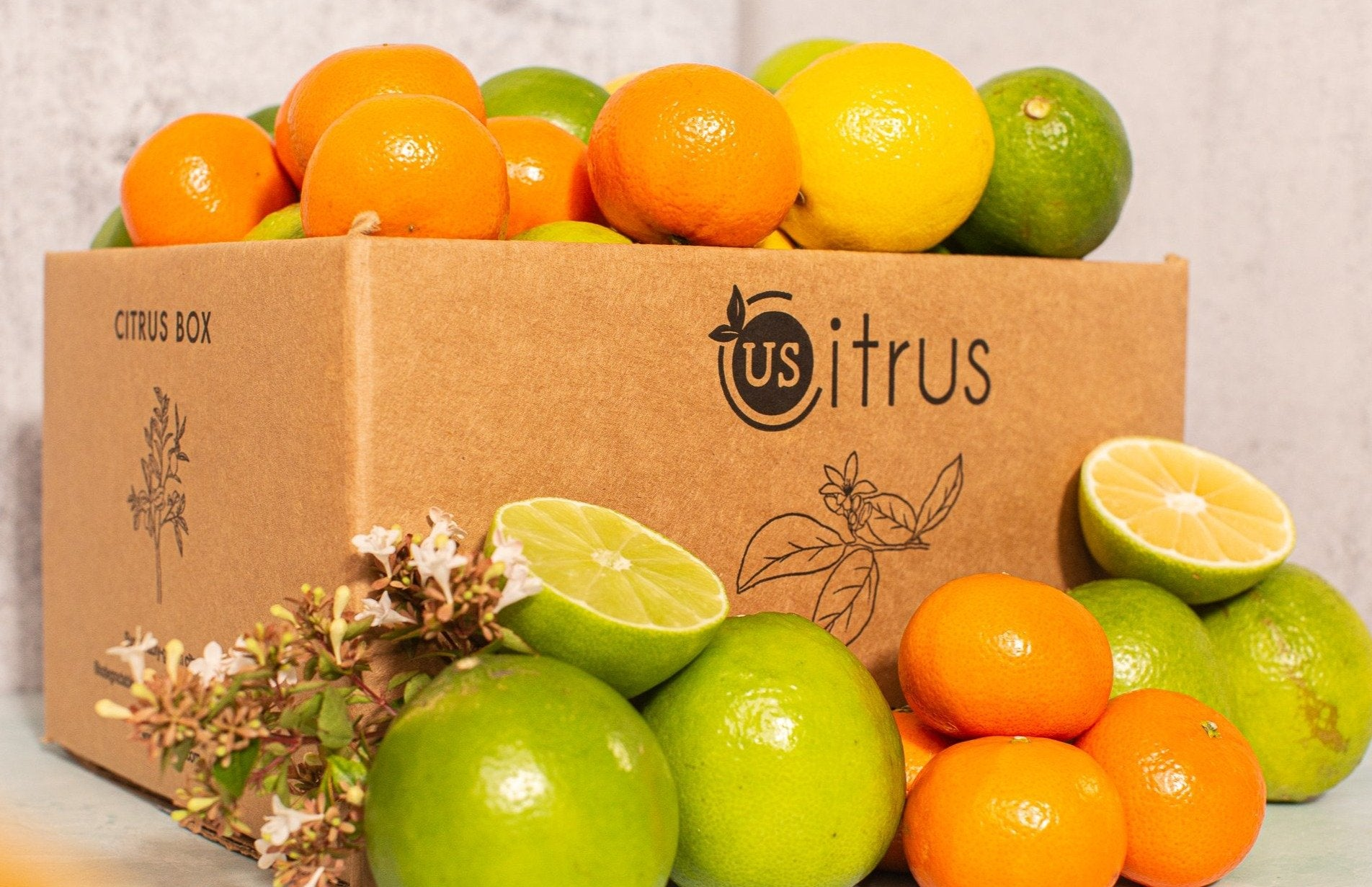 Fresh Citrus Fruit Box from US Citrus - Craft Citrus Club Citrus Fruit Subscription Boxes