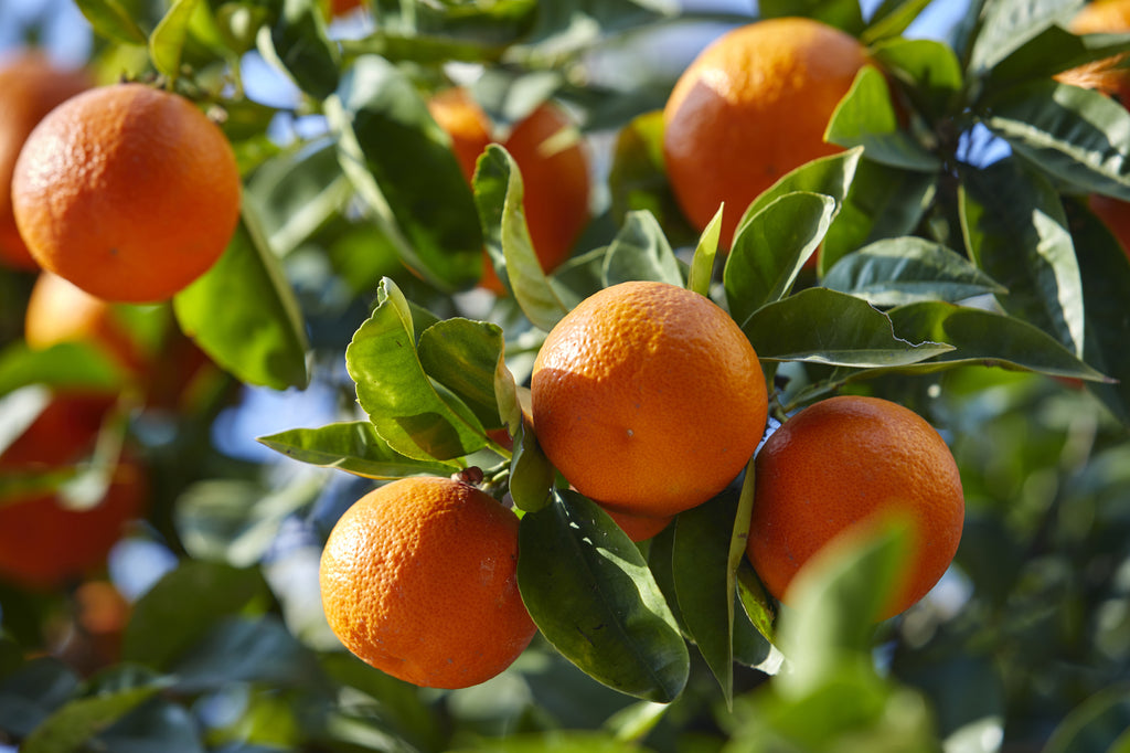 How to Care for a Mandarin Tree