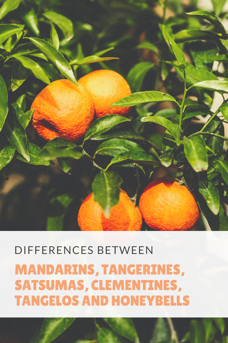 The Differences Between Mandarins, Tangerines, Satsumas, Clementines, Tangelos and Honeybells