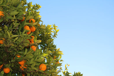 Navel Orange Nutrition Facts
