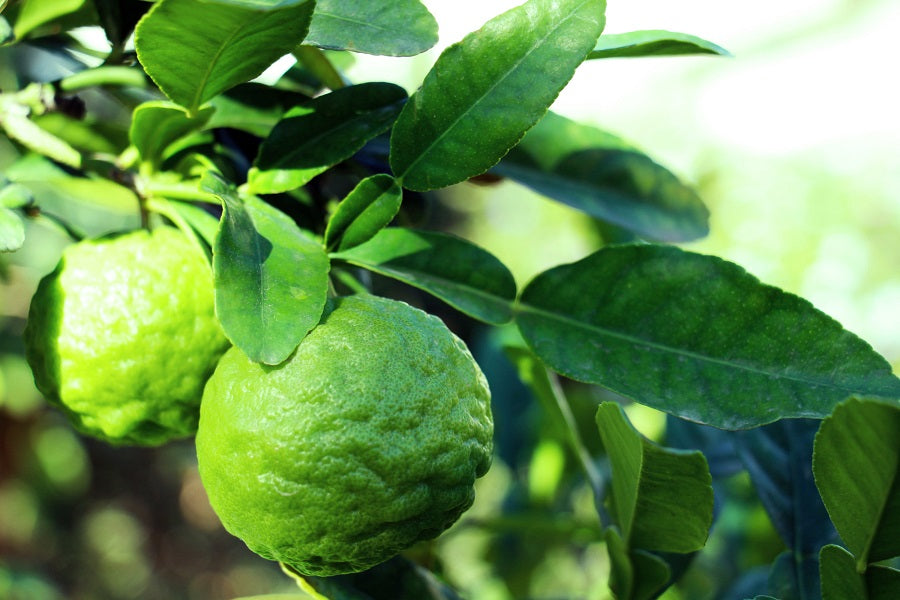 Kaffir (Makrut) Lime Leaves & How to Use Them