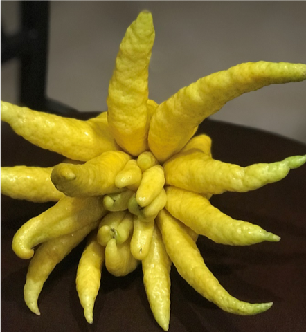 Buddha's Hand Fingered Citron