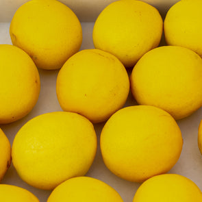 Meyer Lemon Fruit for Sale