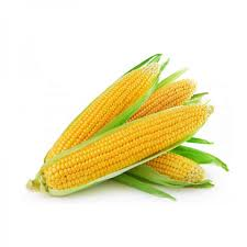 Farm Fresh  Corn