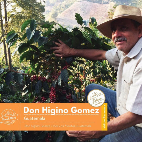 Guatemala | Don Higinio Gomez | Yellow Pacamara | WASHED