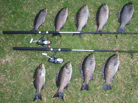 A great day on the water catching Luderick and what we used for them
