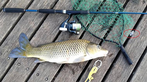 Carp caught on micro plastic and 802 light combo near Sydney