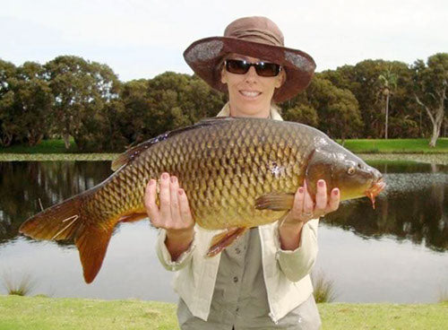 Centennial Park in Sydney Australia is full of giant carp