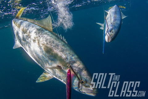 Great shot of catching two kingfish