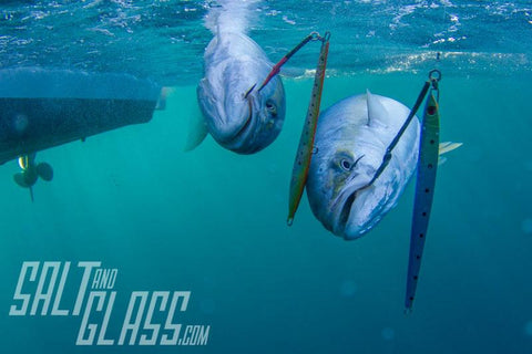 Double kingfish catch