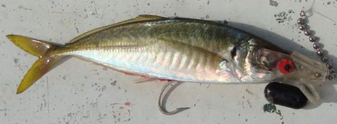You can rig many types of dead bait with head starts for trolling, including Yellowtail