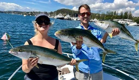 Three Kingfish caught near the Spit Bridge in Australia