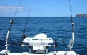 Trolling the Yellowtail live bait rigs behind the boat on downriggers