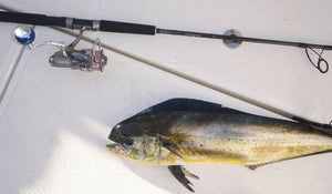 Ryobi 4000 with 7 foot 702 reel and rod combo