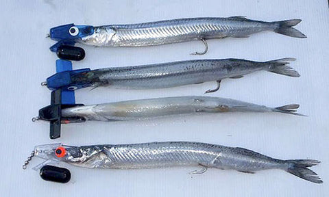 Four Garfish rigged with Head Start Trolling Rigs