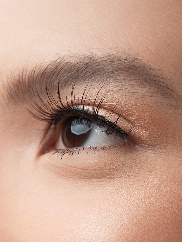 Refined Lashes BLP Beauty