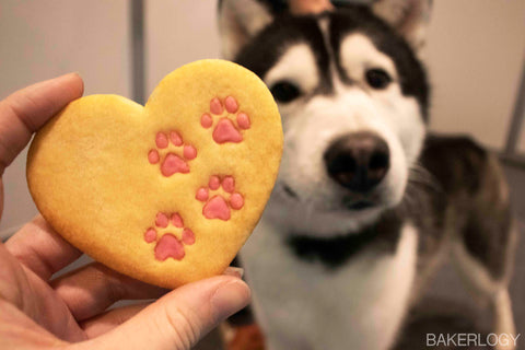 husky dog with heart paw prints cookie