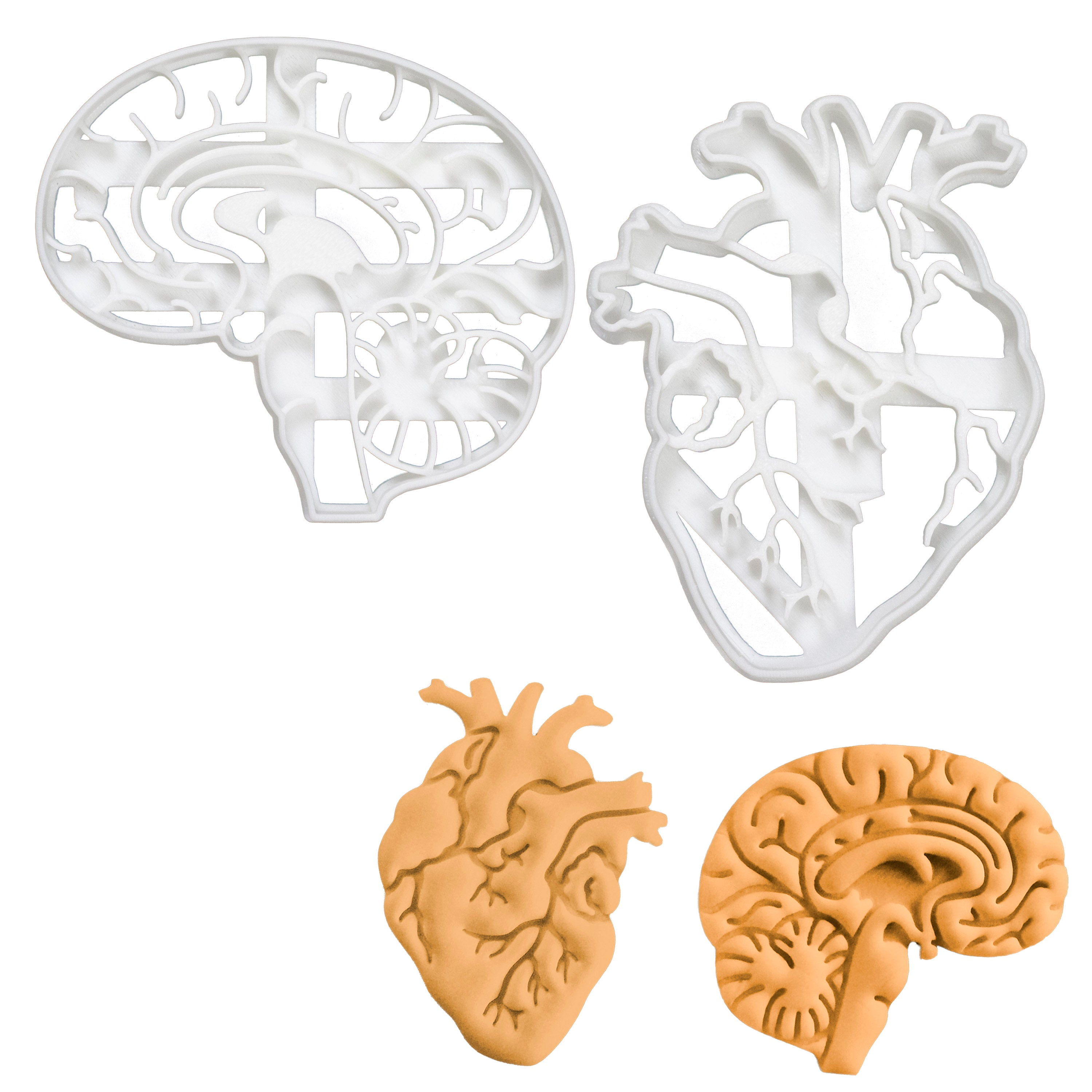 set of anatomical heart and brain cookie cutters