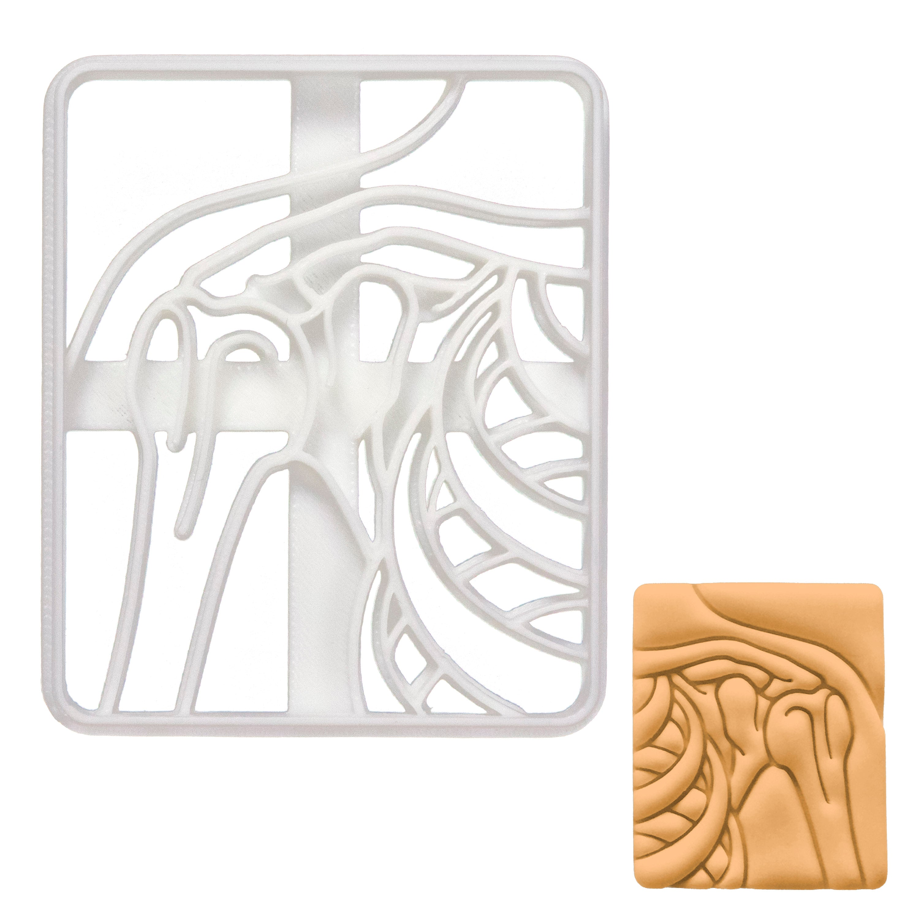 Shoulder x-ray cookie cutter