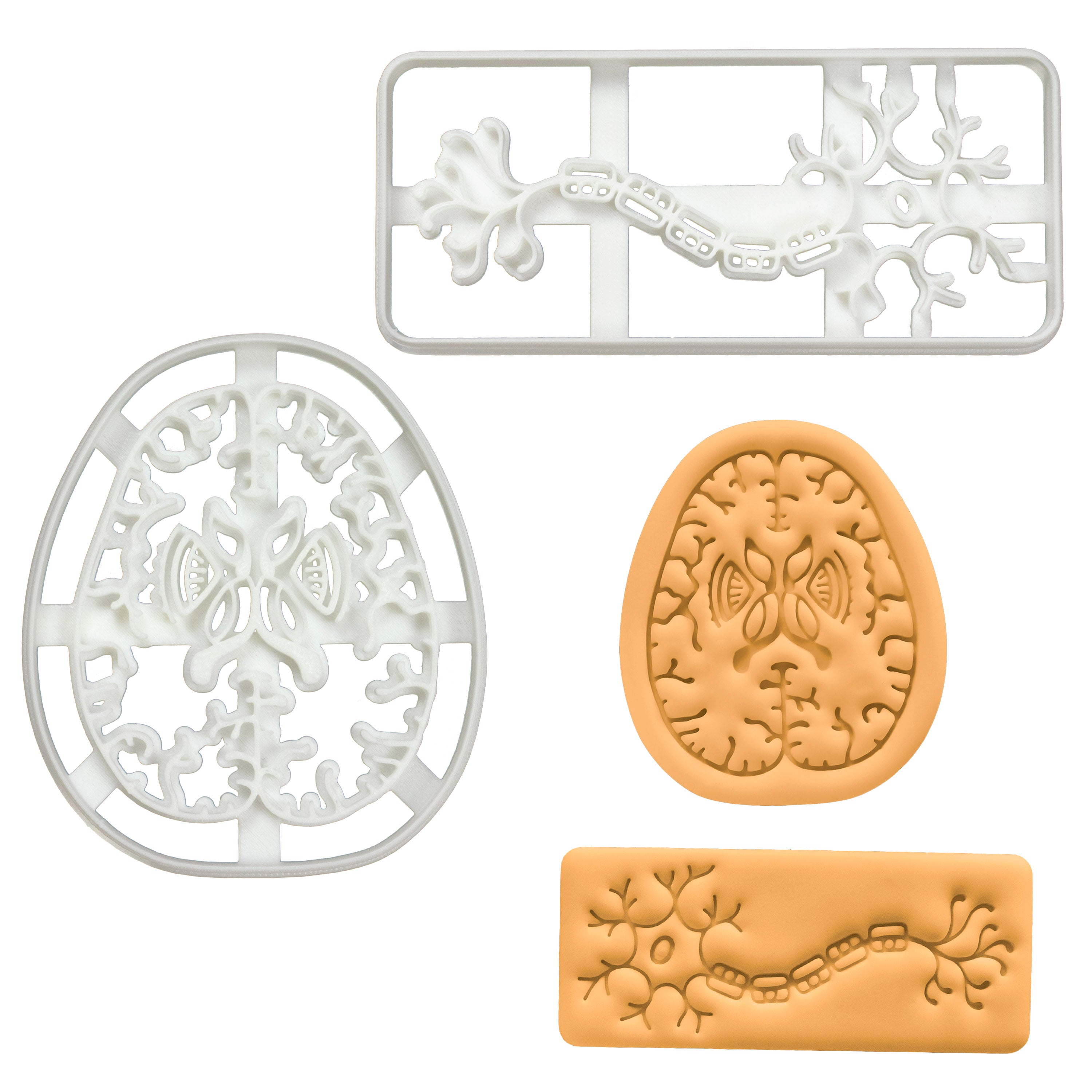 Set of 2 Cookie Cutters: Neuron & Brain Axial Section