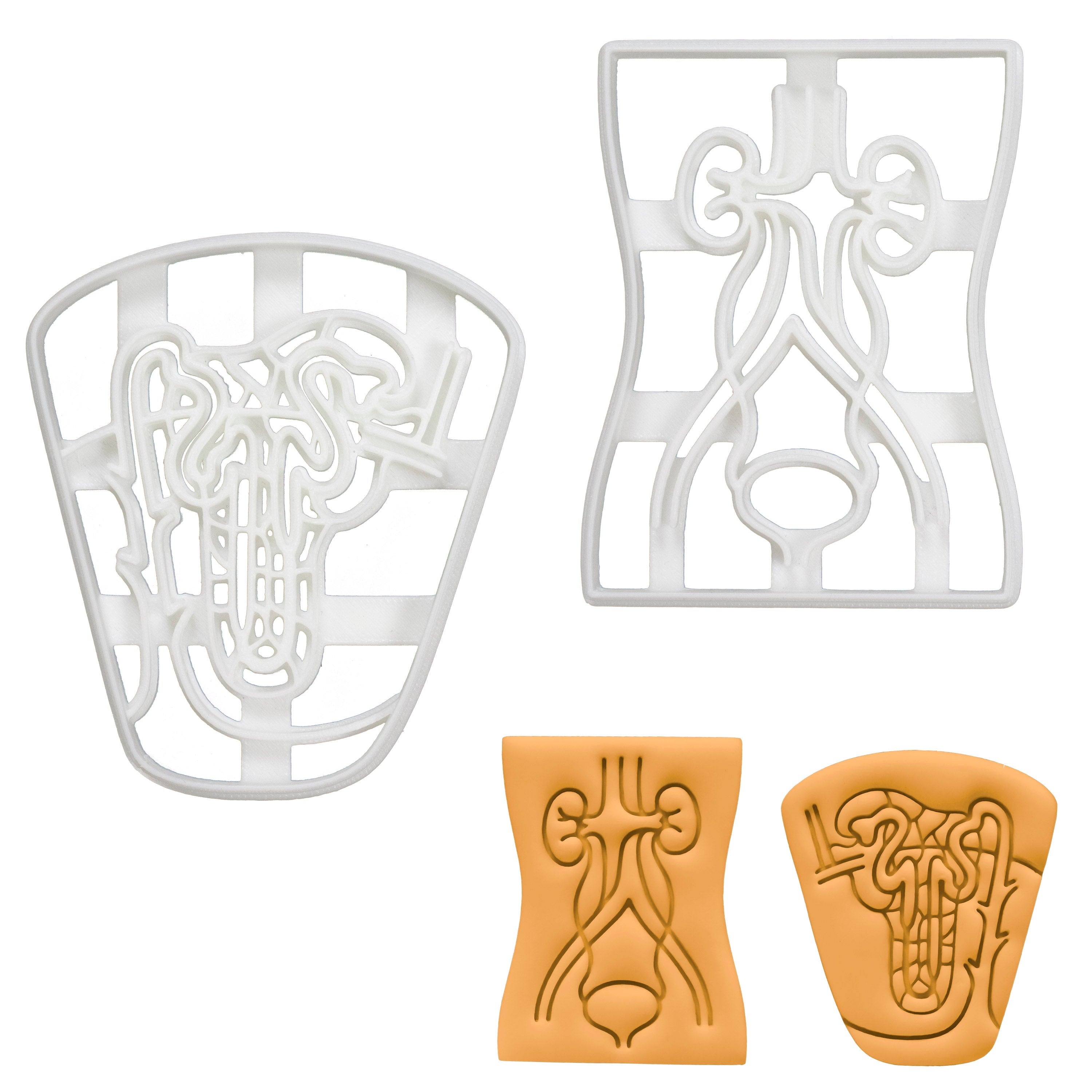 Set of 2 Cookie Cutters: Nephron & Urinary System