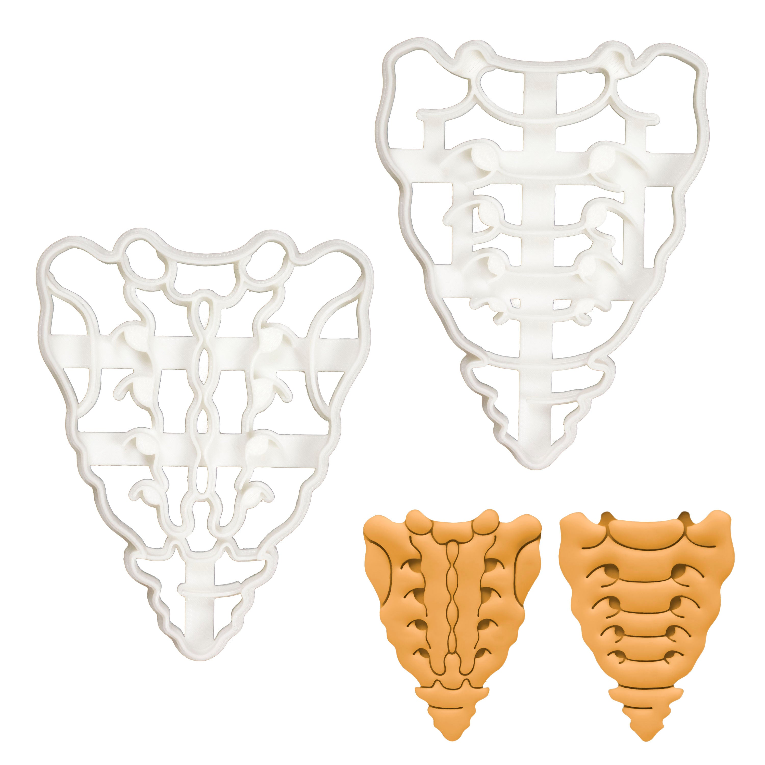 Set of 2 Sacrum and Coccyx cookie cutters (Designs: Anterior and Posterior)